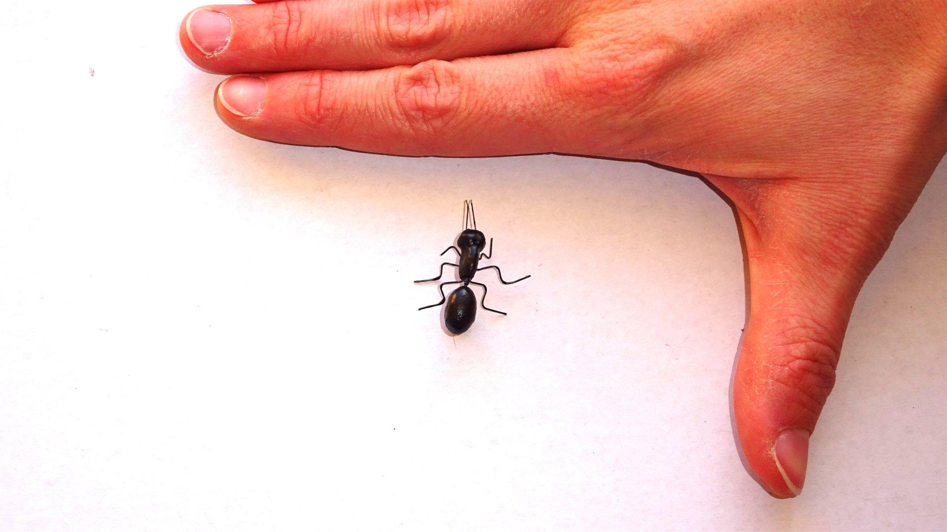 Gemütlich Kleine Kriechende Insekten In Der Küche Bilder ...