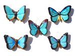 Magnetschmetterlinge blau 5er Set B - Butterfly