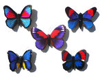 Magnetschmetterlinge blau 5er Set D - Butterfly