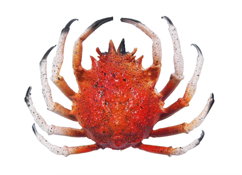 Kunststoffattrappe krabbe gro maritime deko imitation meer - Dekoartikel meer ...